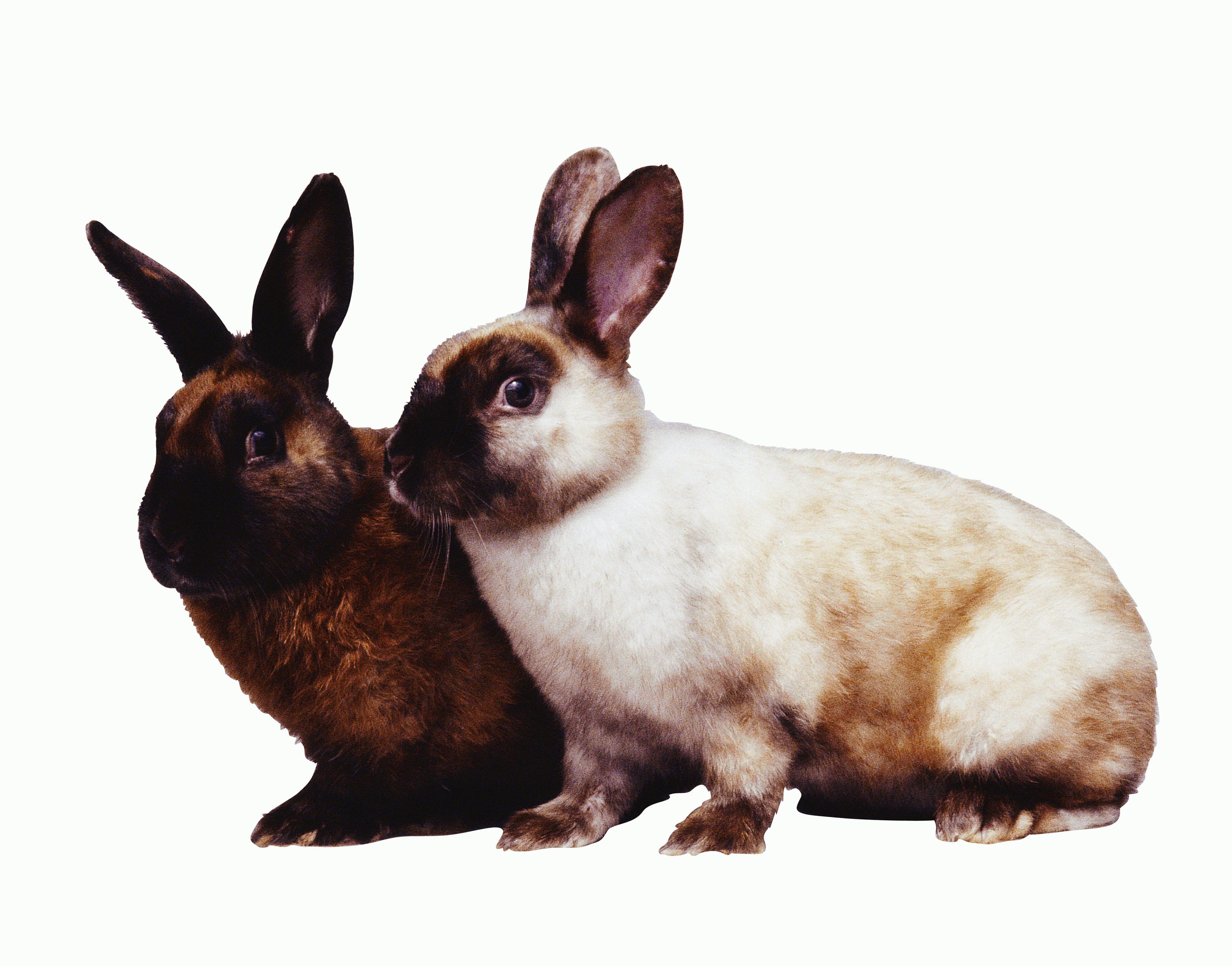 Рахіт у кроликів фото 3 фотография